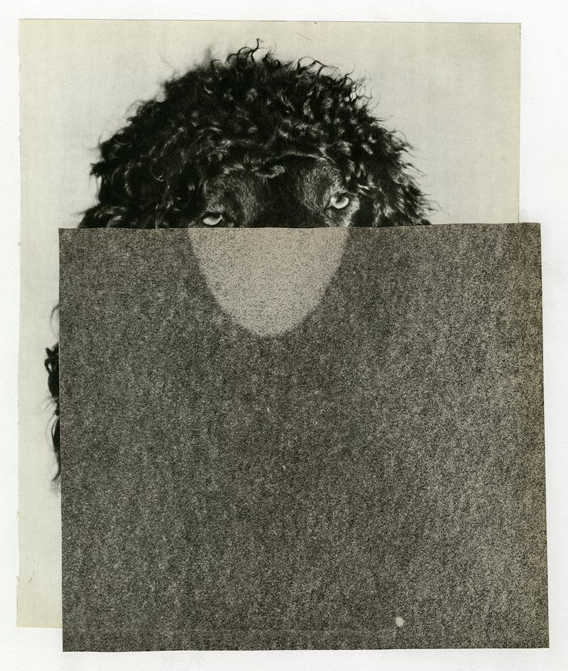 Calway-Fagen art