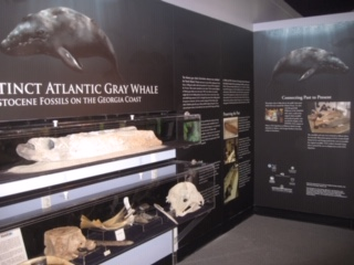 Completed display at UGA aquarium