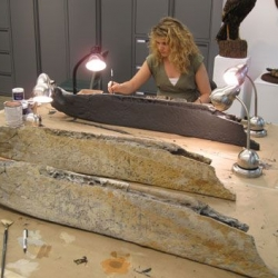 Cast painted to resemble the original manible (front); original whale manible used as a model (center); and Amy Sands painting cast (back). (Photo: Scott Noakes, UGA)